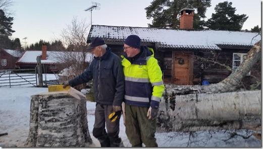 Bengt och Börje vid den kraftiga stubben