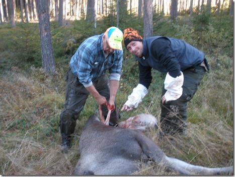 Jaktledaren Bertil Pellas visar nybörjaren hur passningen ska gå till