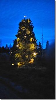 JulgranEN på Holen