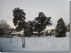 Pellastallarna och julenen