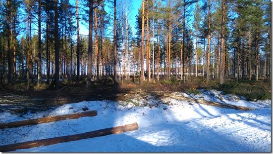 Skogen mellan Å-brona och Grinden har gallarats