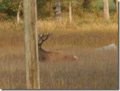 Hjorten på väg från Storbunken