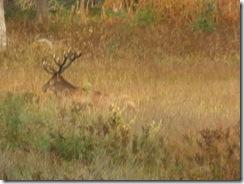 Hjorten på väg upp från Storbunken