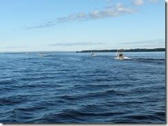 Trollingbåtarna på väg ut mot Storsiljan